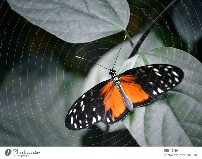 Not a cat. Animal Warmth Virgin forest Butterfly 1 Relaxation Wait Esthetic Elegant Exotic Beautiful Cute Gray Red Black Safety (feeling of) Calm Orange Wing