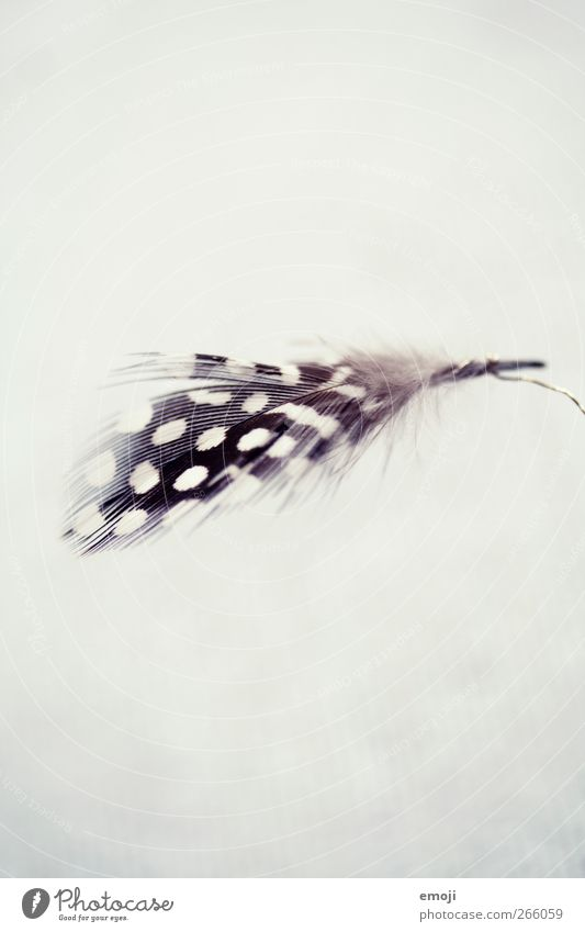 White Black Decoration Feather Spotted Animal Structures and shapes Feasts & Celebrations
