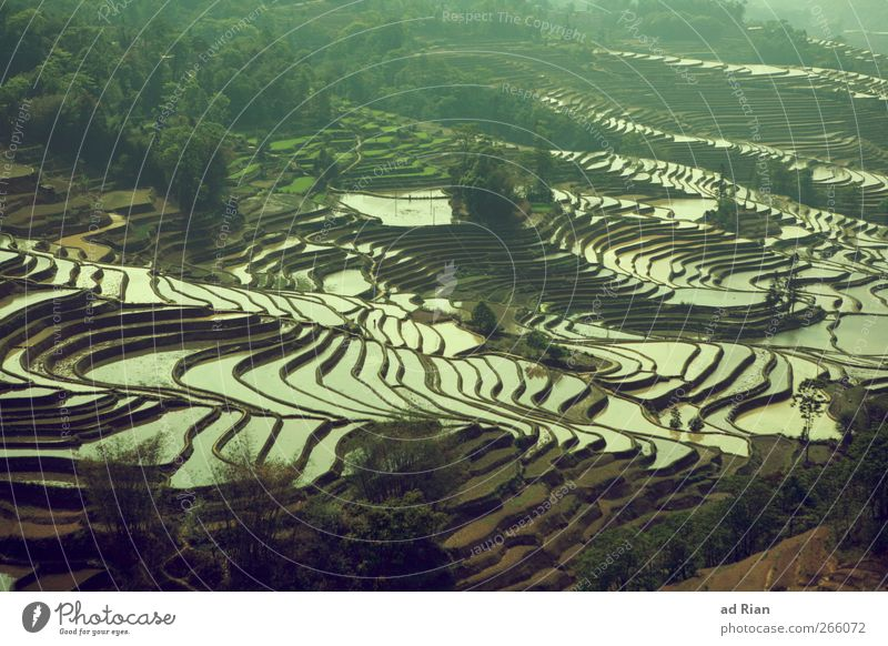 Nature Water Landscape Field Travel photography Agriculture China Paddy field
