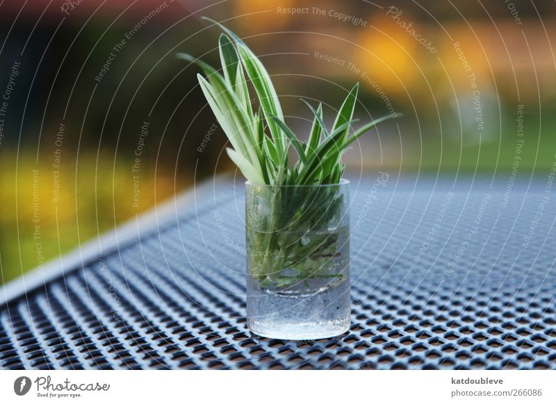 Green Plant Natural Growth Foliage plant Tumbler Breed