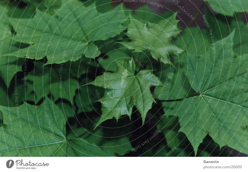 press Leaf Green Multicoloured Nature Life Natural