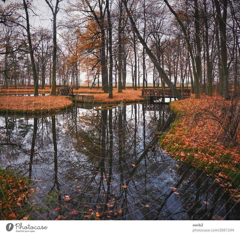 Symmetrical park Water Cloudless sky Horizon Autumn Beautiful weather Tree Grass Bushes Twigs and branches Autumn leaves Deciduous tree Park Island Pond Wood