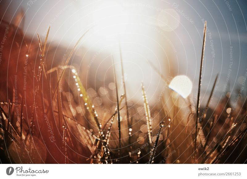 doormat Environment Nature Plant Drops of water Cloudless sky Autumn Grass Blade of grass Meadow Glittering Illuminate Bright Small Near Wet Point Thorny Under