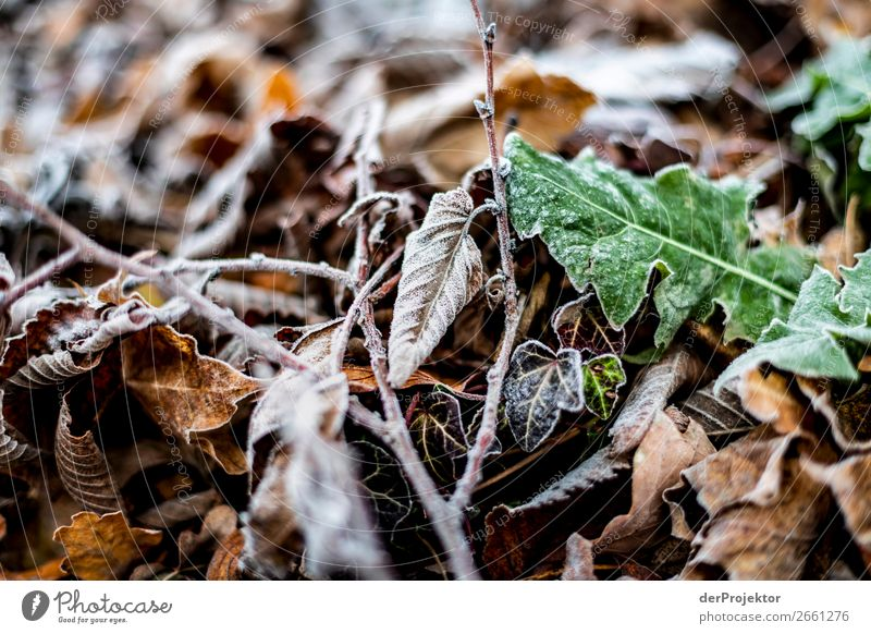 Autumn leaves with frost Environment Nature Landscape Plant Winter Beautiful weather Ice Frost Leaf Park Esthetic Exceptional Brown Truth Sadness Concern Pain