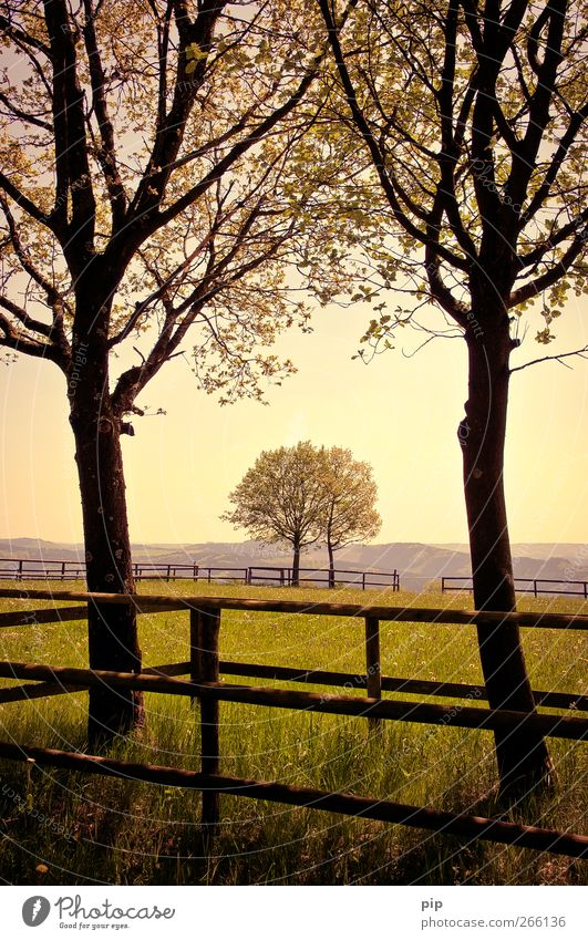 Nature Tree Summer Leaf Calm Far-off places Landscape Meadow Grass Horizon In pairs Grief Hill Beautiful weather Fence Attachment