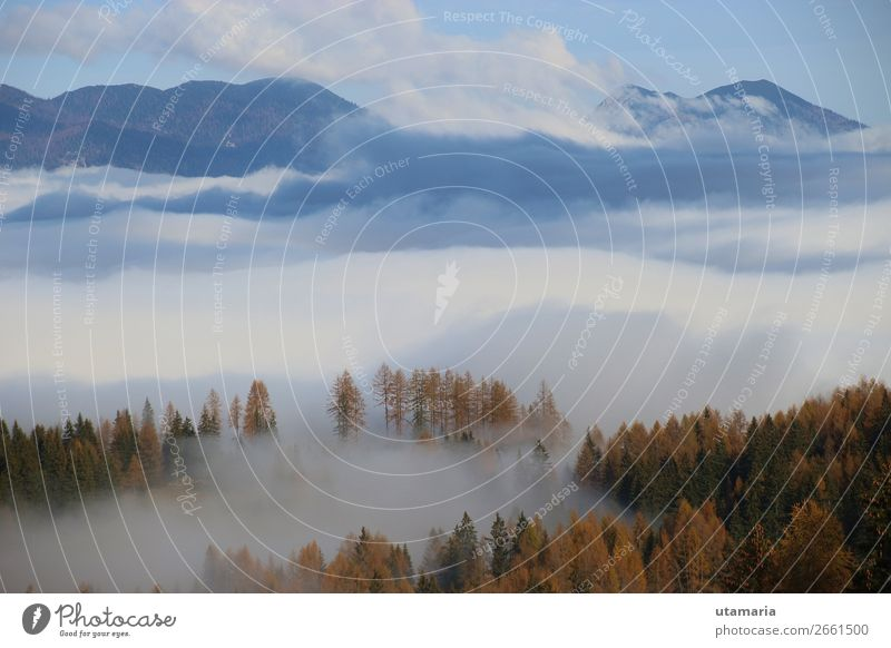 Thick fog over the valley, in late autumn. Austria. Mountain Hiking Winter sports Climbing Mountaineering Skiing Nature Landscape Plant Clouds Autumn Fog Tree