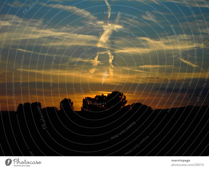 X Heaven Sunset Tree Warm light Plain