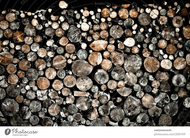 stack of wood Environment Nature Tree Old Wood Dry Firewood Stack of wood Colour photo Subdued colour Exterior shot Day Light Contrast Central perspective