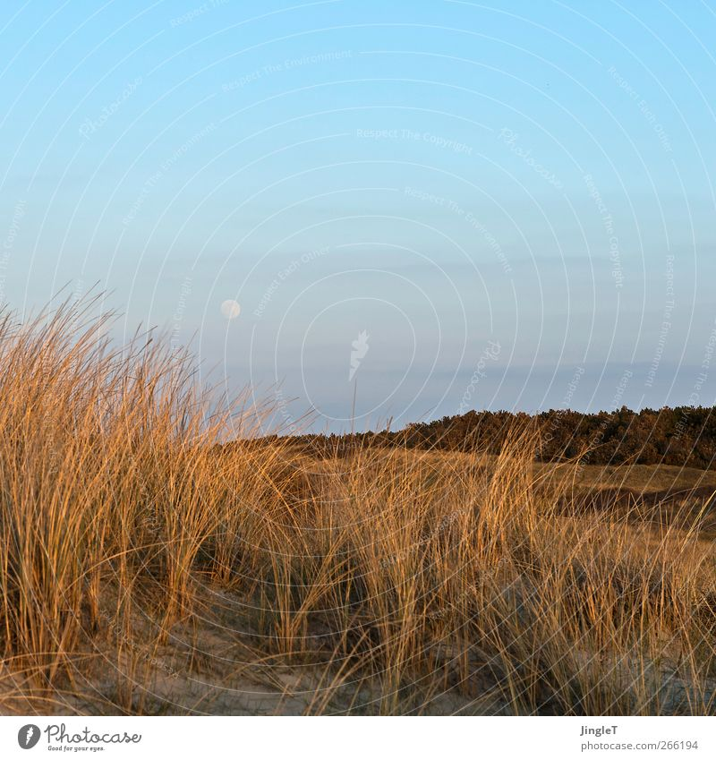 Sky Nature Blue Beautiful Vacation & Travel Plant Beach Relaxation Environment Landscape Freedom Spring Grass Sand Happy Brown