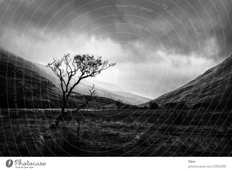 unidentified light Landscape Plant Sky Clouds Sun Tree Grass Meadow Hill Mountain Threat Cold Gray Black White Fence Black & white photo Exterior shot Deserted