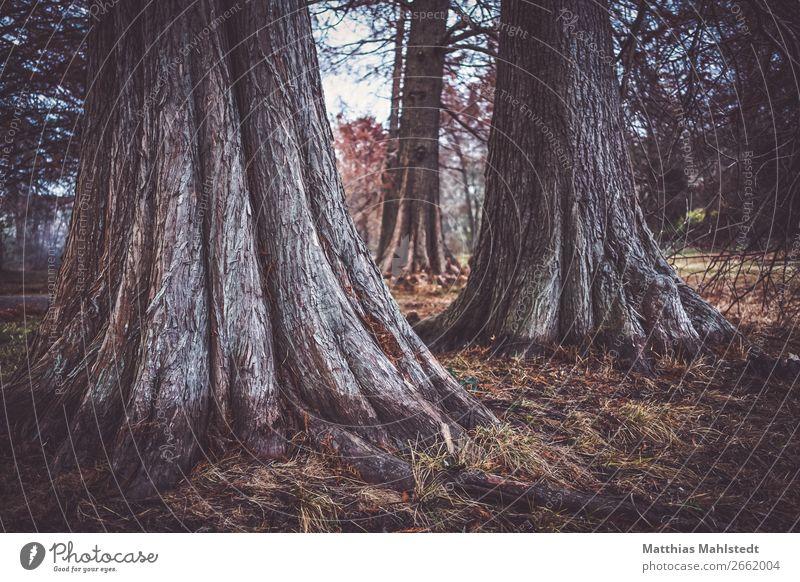 Nature Plant Landscape Tree Autumn Environment Exceptional Brown Park Eternity Uniqueness Peace