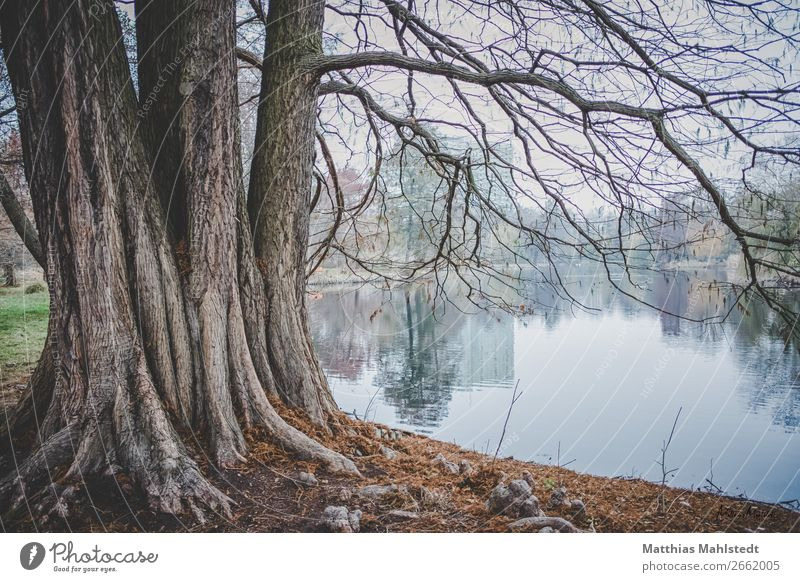 Tree on the lake shore Environment Nature Landscape Plant Autumn Park Lake Exceptional Gigantic Blue Brown Green Loneliness Serene Power Colour photo