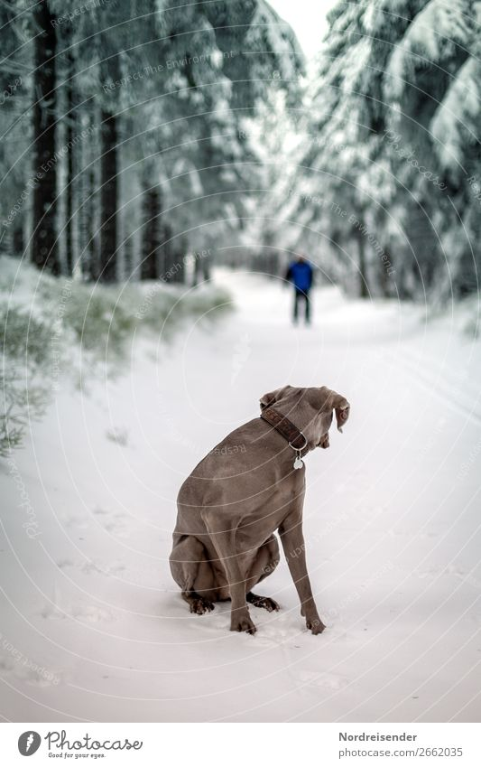 Who's interrupting? Trip Winter Snow Winter vacation Hiking Winter sports Skiing Human being Nature Landscape Climate Ice Frost Tree Forest Street