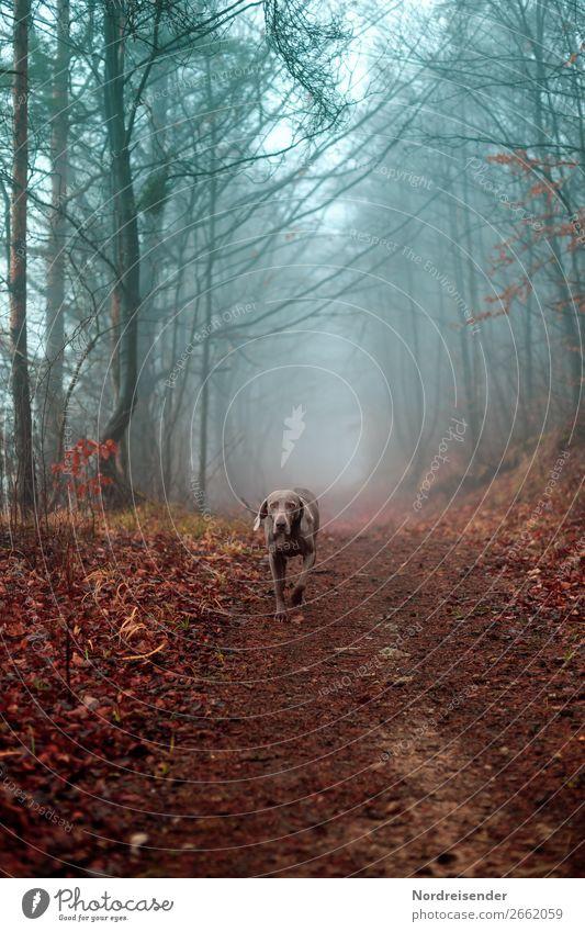 Nature Dog Blue Landscape Tree Animal Calm Forest Street Autumn Lanes & trails Brown Trip Rain Hiking Fog
