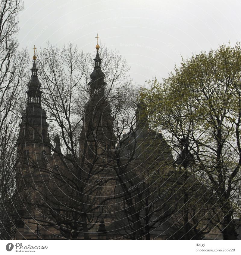 hidden behind trees... Architecture Culture Plant Sky Clouds Tree Park Fulda district Town Church Dome Manmade structures Building Church spire