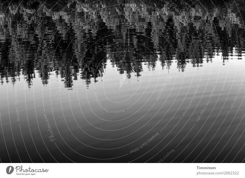 The lake rests still Environment Nature Plant Elements Water Forest Lake Gray Black White Emotions Relaxation Calm Reflection Smooth Black & white photo