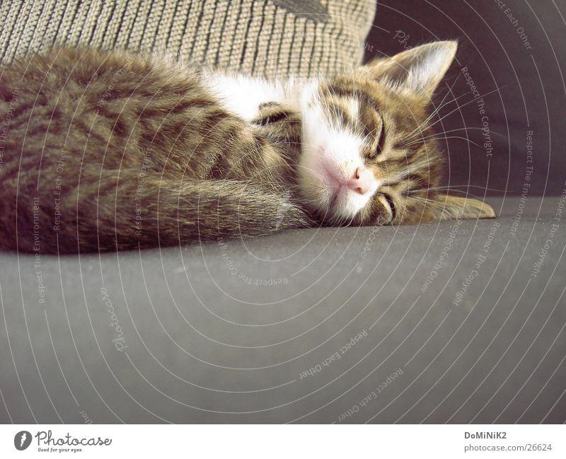 Calm Loneliness Eyes Animal Relaxation Dream Cat Closed Sleep Sweet Wild animal Ear Bed Pelt Sofa Serene