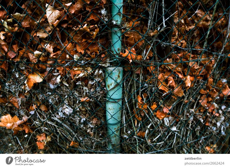Old leaves Berlin Autumn Autumn leaves Leaf November October Park Town City life Suburb Compost shift Insulation Heap Fence Wire netting fence Wire fence Border