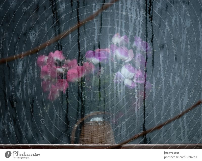 Silent flowers at the window Lifestyle Elegant Living or residing Winter Ice Frost bleed Window Decoration Glass Stripe Blossoming Illuminate Esthetic Kitsch