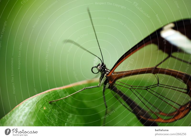 Nature White Green Beautiful Plant Leaf Animal Black Brown Wild animal Elegant Natural Exceptional Esthetic Wing Animal face