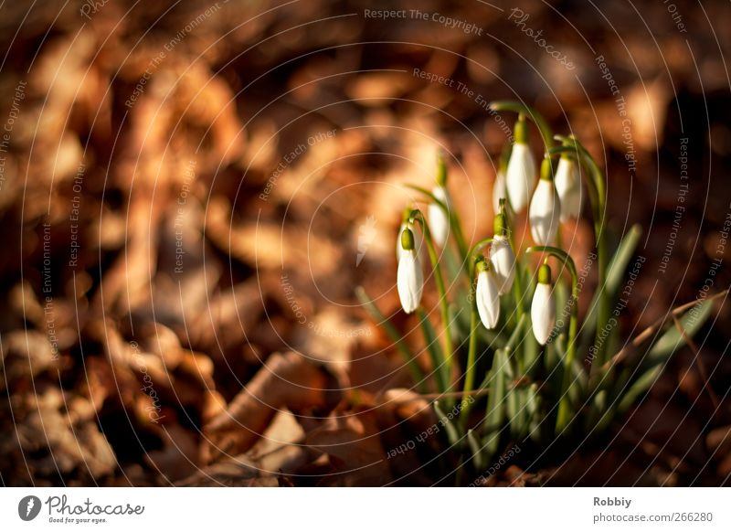Nature Green Plant Flower Autumn Spring Park Brown Natural Spring fever Snowdrop Spring flower Spring day