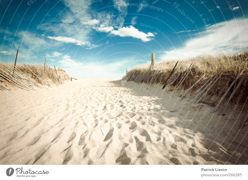 Nature Vacation & Travel Sun Ocean Summer Beach Calm Far-off places Relaxation Environment Landscape Coast Freedom Sand Moody Earth