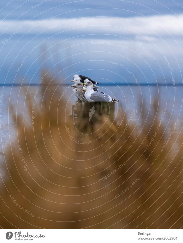 strung Animal Wild animal Bird Animal face Wing Group of animals Flying Seagull Gull birds Black-headed gull  Water Colour photo Subdued colour Multicoloured