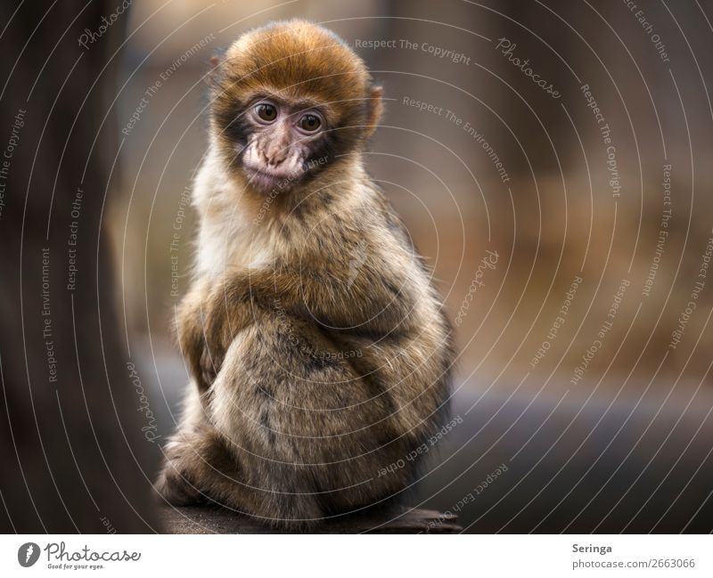 Animal Baby Animal Sadness A Royalty Free Stock Photo From Photocase