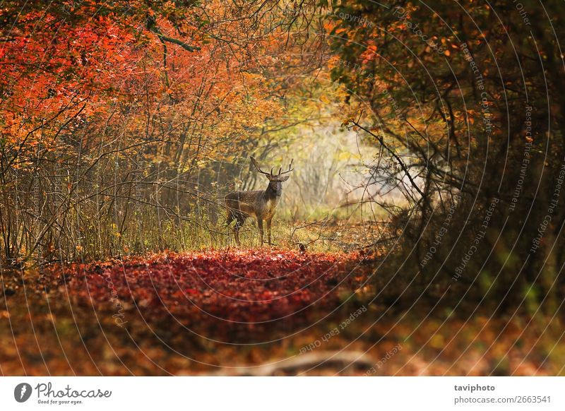curious deer looking towards the photographer Beautiful Playing Hunting Man Adults Environment Nature Landscape Animal Autumn Park Forest Street Stand Faded