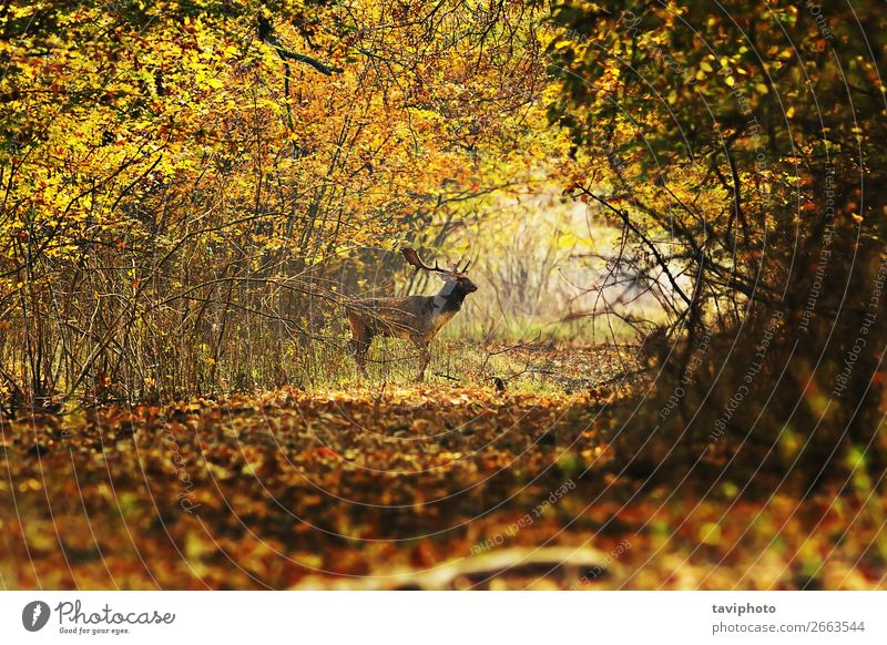deer buck crossing forest road Beautiful Life Playing Hunting Man Adults Environment Nature Landscape Animal Autumn Leaf Forest Street Lanes & trails Faded