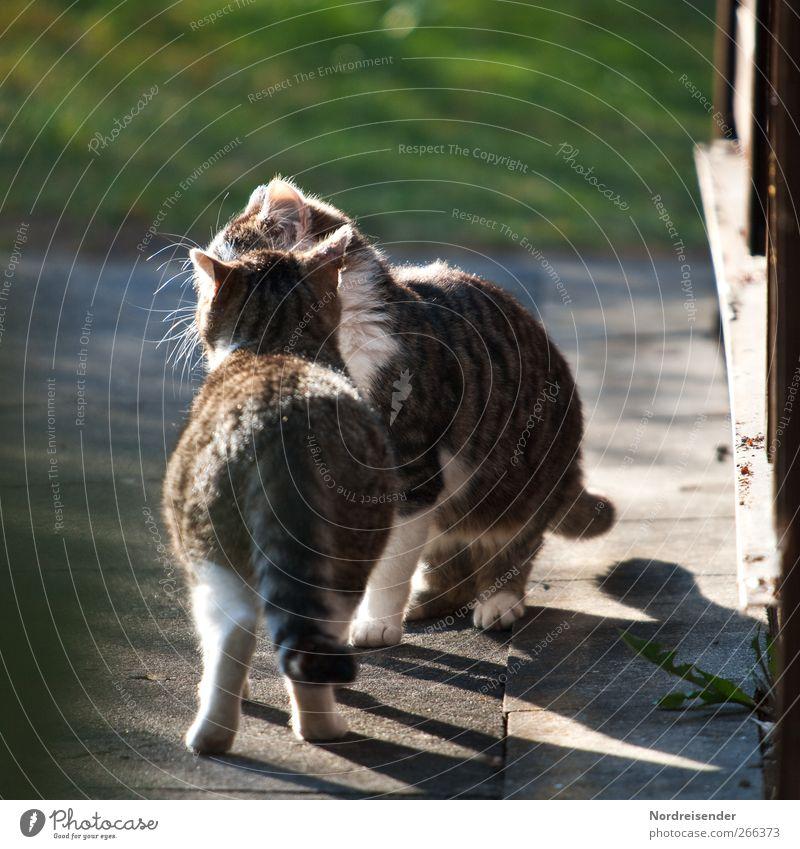 Cat Nature Animal Love Life Lanes & trails Spring Happy Contentment Concrete Communicate Romance Curiosity Touch Beautiful weather Advice