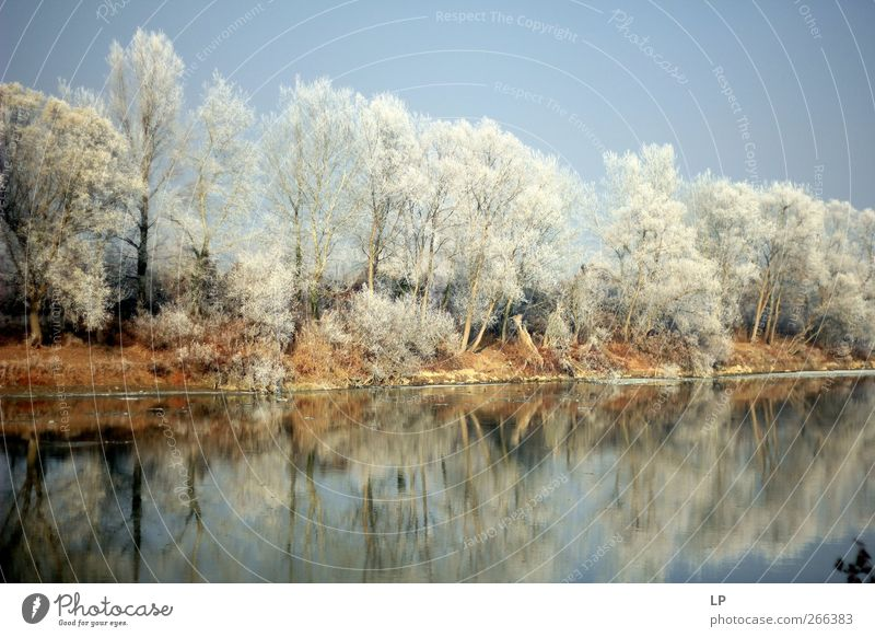 Still Sightseeing Winter Snow Nature Water Sky Beautiful weather Ice Frost Tree Forest River bank Lake Fantastic Natural Blue Silver Contentment Serene Dream