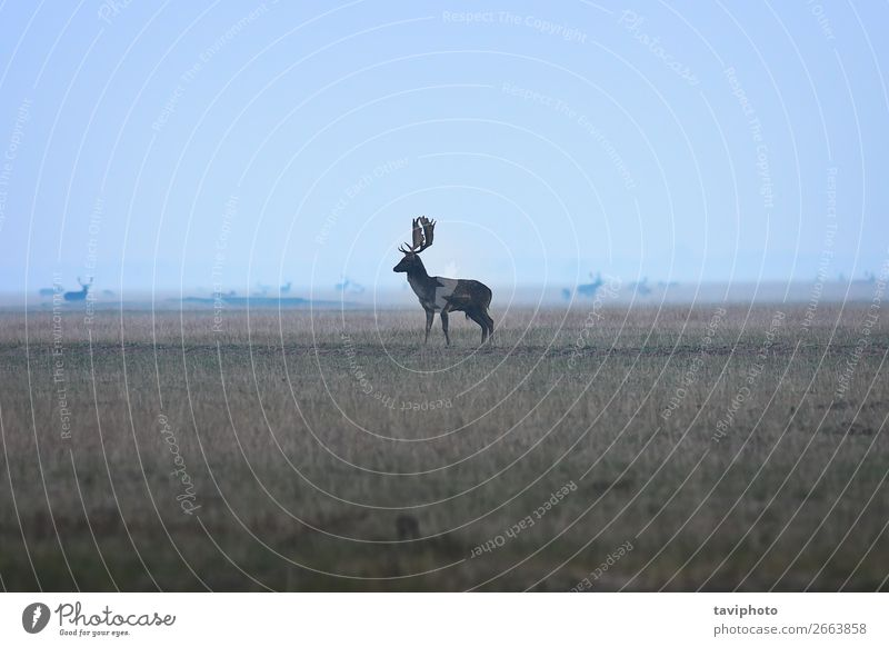 large fallow deer buck on twilight Nature Man Blue Colour Beautiful Landscape Animal Forest Adults Autumn Environment Natural Meadow Playing Wild Park