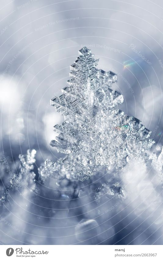 ice art Life Harmonious Winter Ice Frost Snow Ice crystal Crystal structure Illuminate Exceptional Fantastic Cold Small Natural Power Complex Pure Transience