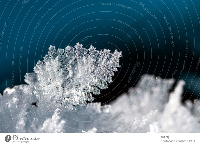 complex wonder of nature Winter Ice Frost Ice crystal Crystal Illuminate Exceptional Thin Authentic Fantastic Cold Natural Blue Purity Humble Bizarre