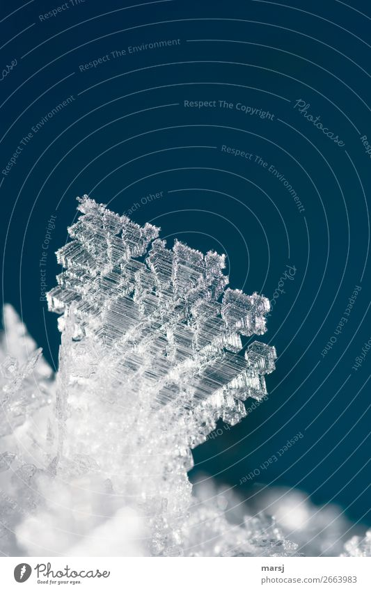 ice crystal Winter Ice Frost Ice crystal Exceptional Cold Small Power Bizarre Uniqueness Elegant Nature Crystal structure Frozen Colour photo Subdued colour