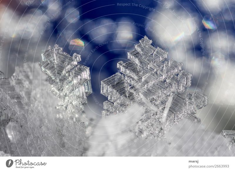 ice crystals Nature Winter Ice Frost Ice crystal Crystal Glittering Illuminate Esthetic Exceptional Thin Authentic Sharp-edged Fantastic Cold Blue Success Power