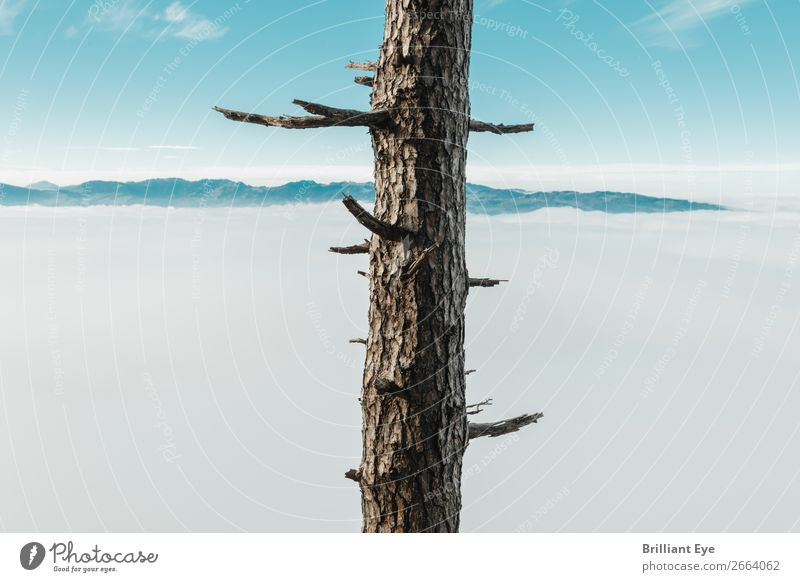 unclothed Vacation & Travel Winter Nature Autumn Climate Fog Tree Mountain Old Infinity Natural Clean Thorny Brown Calm Purity Wanderlust Esthetic Relationship