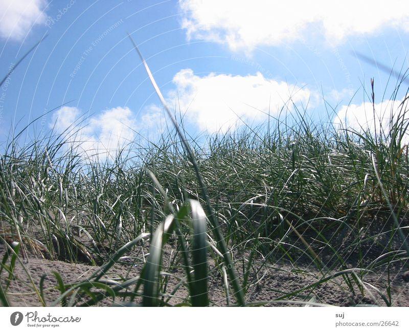 dune grass Grass Clouds Beach Europe Beach dune Sand North Sea