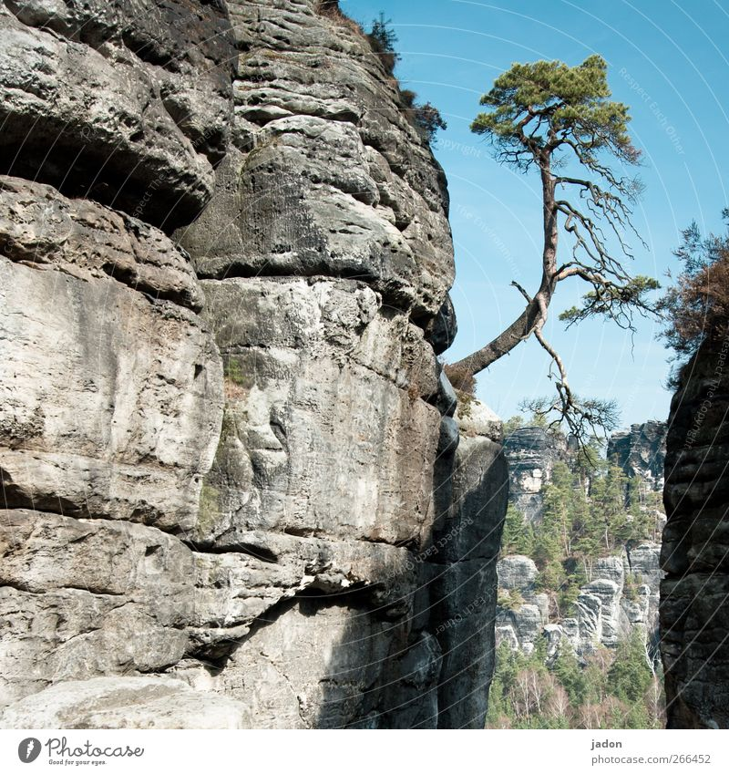 Nature Tree Landscape Mountain Contentment Power Rock Natural Growth Bridge Perspective Curiosity Climbing Beautiful weather Contact Divide