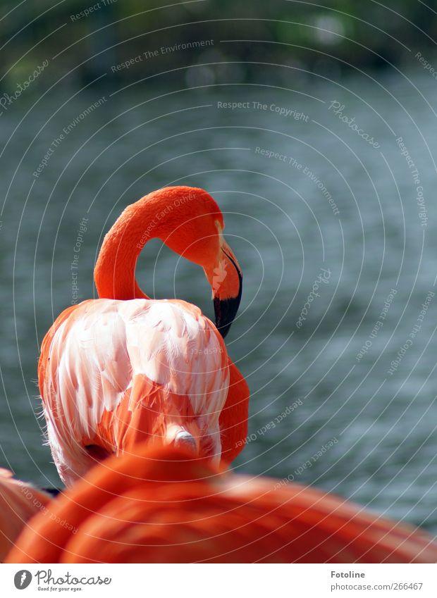 Nature Water Animal Environment Coast Bright Bird Orange Pink Wild animal Natural Elements Wing Feather Beak Flamingo