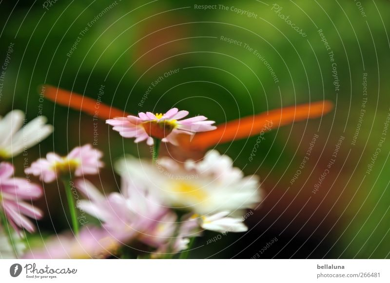 Nature Green Beautiful Plant Flower Leaf Animal Yellow Grass Blossom Orange Pink Wild animal Exceptional Wing Butterfly