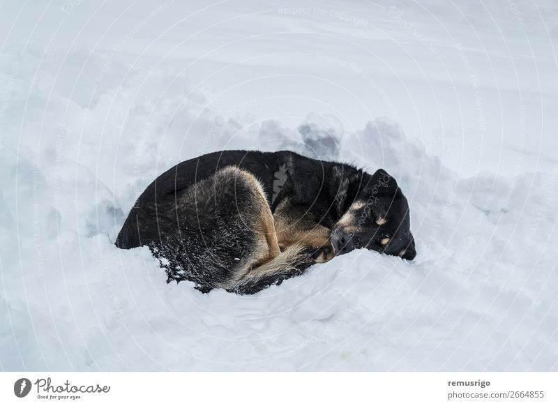 Dog sleeping on snow Winter Snow Feet Environment Animal Weather Park Paw Sleep Wild Black White Loneliness abandoned cold Drift Frost Frozen homeless Resting