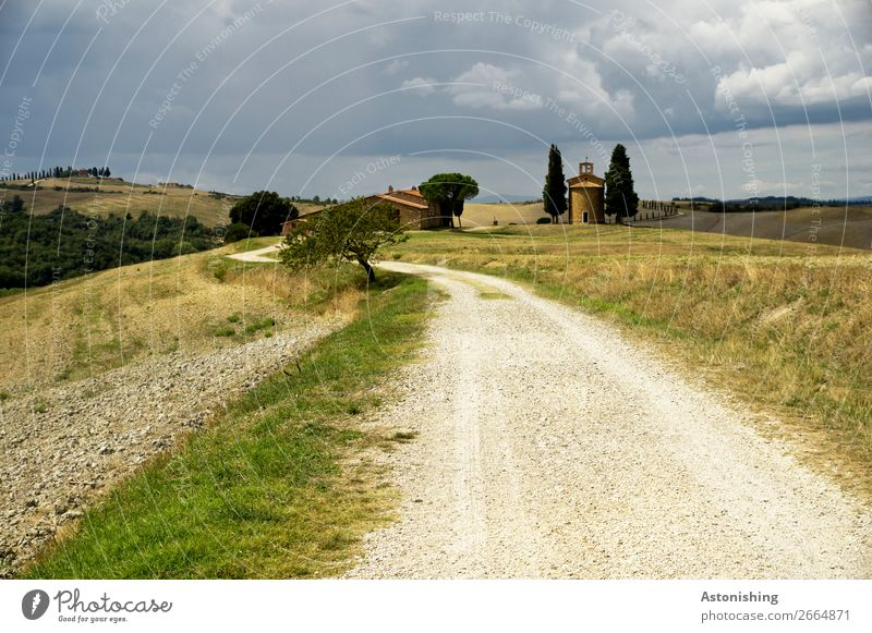 along the road Environment Nature Landscape Plant Sky Storm clouds Horizon Summer Weather Bad weather Tree Grass Meadow Field Hill Siena Tuscany Italy
