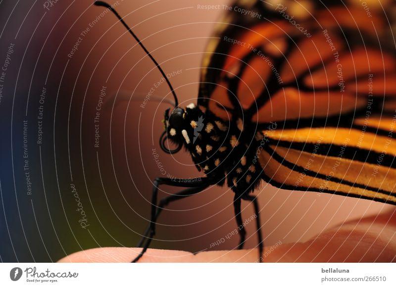 Human being Nature White Beautiful Animal Black Orange Pink Wild animal Sit Natural Exceptional Fingers Esthetic Wing Soft