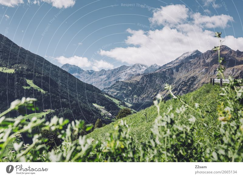 South Tyrolean Alps | Transalp Hiking Climbing Mountaineering Nature Landscape Sky Clouds Sun Summer Beautiful weather Flower Meadow Infinity Sustainability