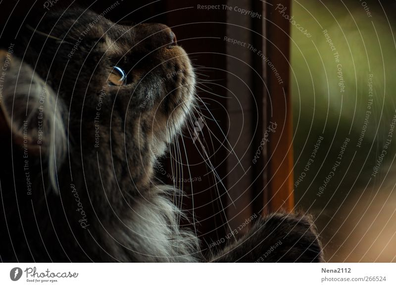 captive game Animal Pet Cat Animal face 1 Observe Catch Hunting Wait Endurance Interest Hope Eyes Looking Playing Colour photo Interior shot Close-up Detail