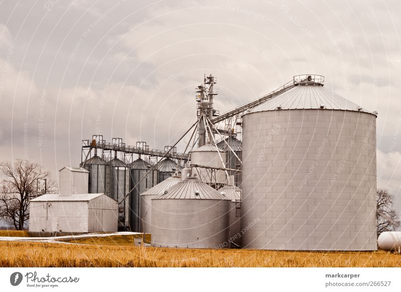 Silos on farm against overcast sky Beautiful Work and employment Landscape Clouds Autumn Concrete Steel Exceptional Large Gold alfalfa barn big bins fall Farm