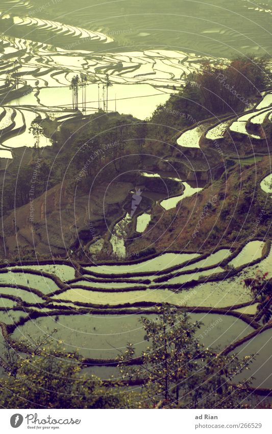 lakes Nature Landscape Earth Water Tree Hill Lake Paddy field Agriculture Yuanyang China Yunnan Moody Symmetry Stairs Colour photo Exterior shot Day Twilight