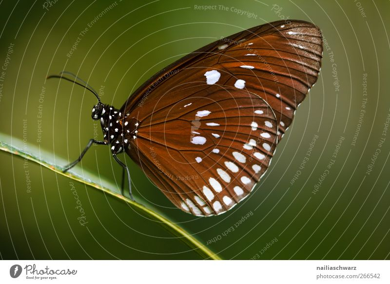 butterfly Environment Nature Animal Wild animal Butterfly Wing Insect 1 To hold on Sit Beautiful Natural Brown Green Idyll Environmental protection Earth Score